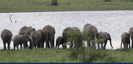 Fællesrejse til Sydafrika Skovlund Efterskole